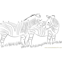 Zebra Looking Back Dot to Dot Worksheet