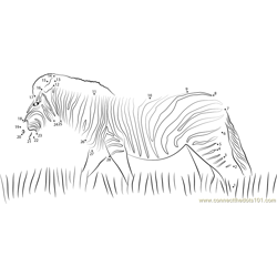 Zebra Walking in the grass Dot to Dot Worksheet