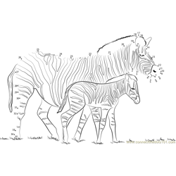 Zebra With his Little Son Dot to Dot Worksheet