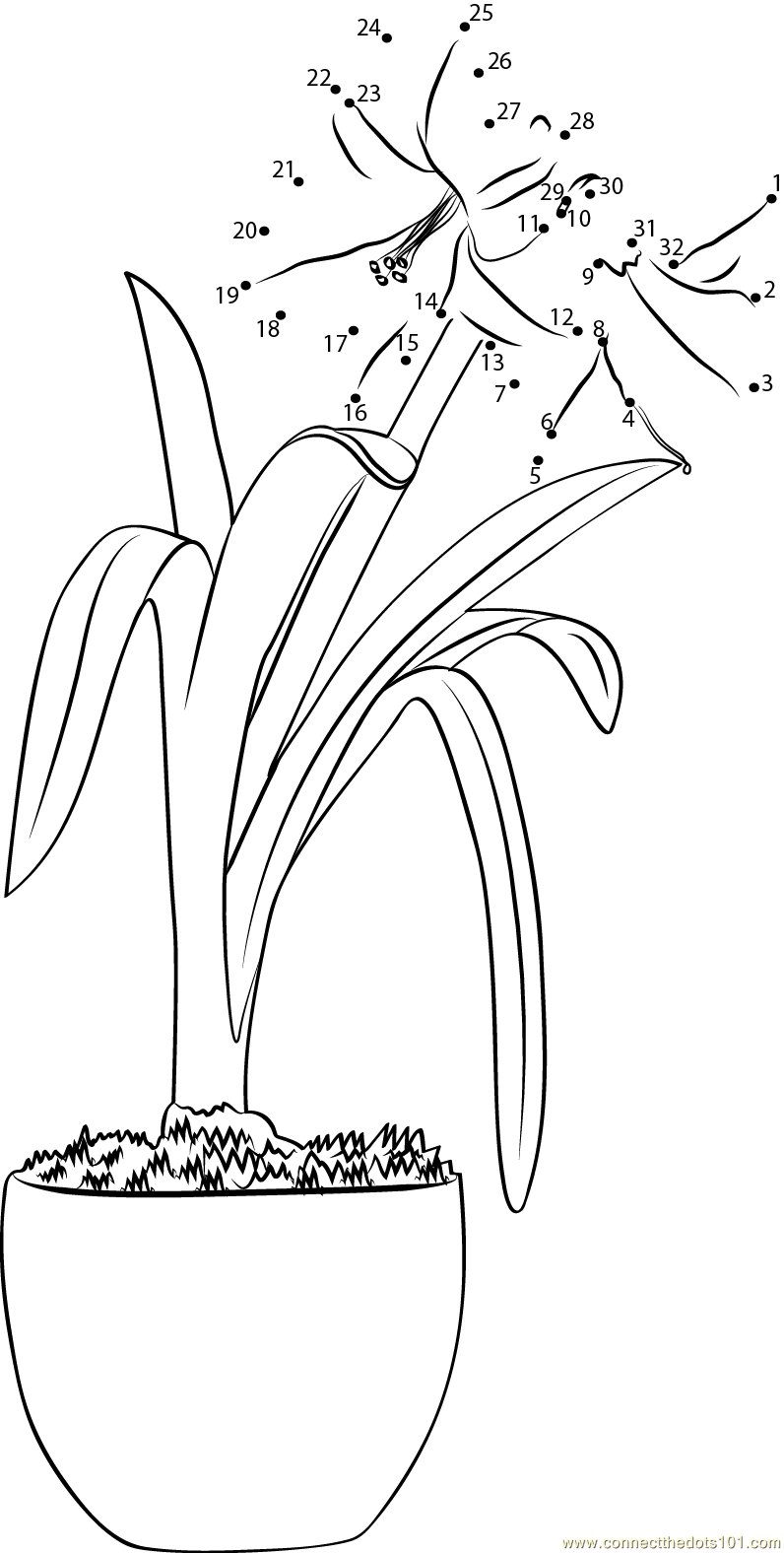 amaryllis coloring pages - photo#7