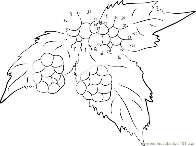Connect The Dots Blackberry Fruit Tree Ripe Bramble