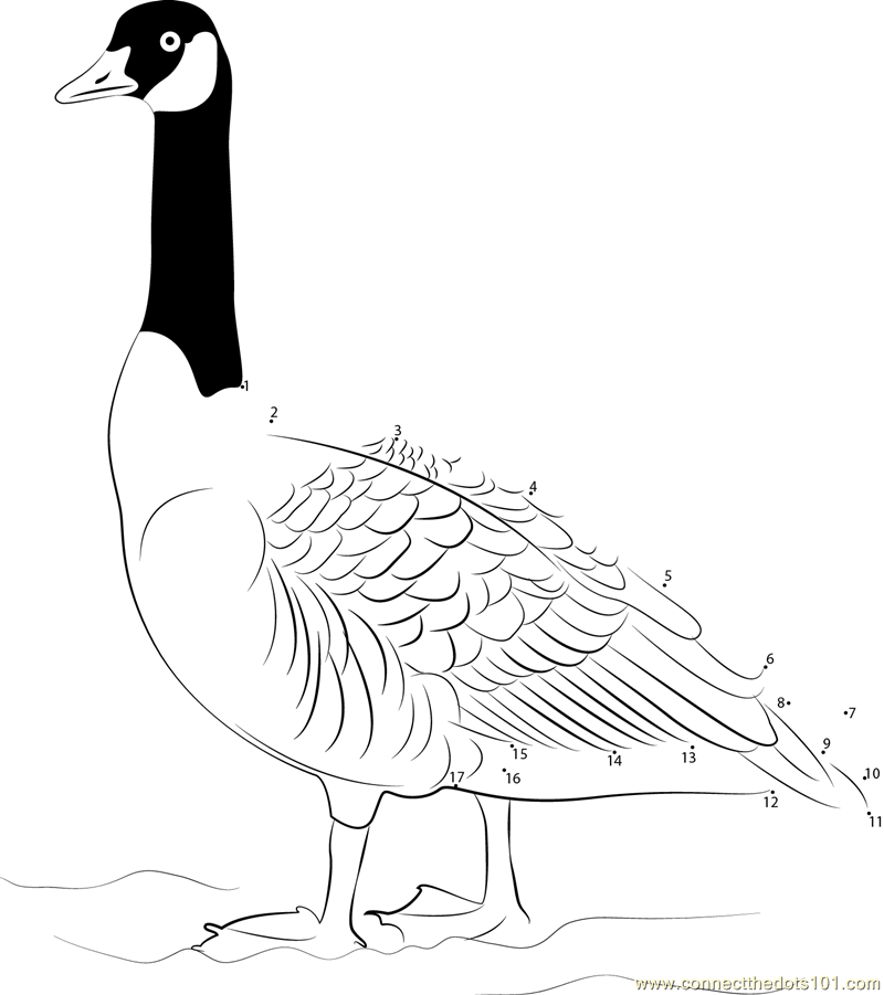canada goose coloring pages - photo#35