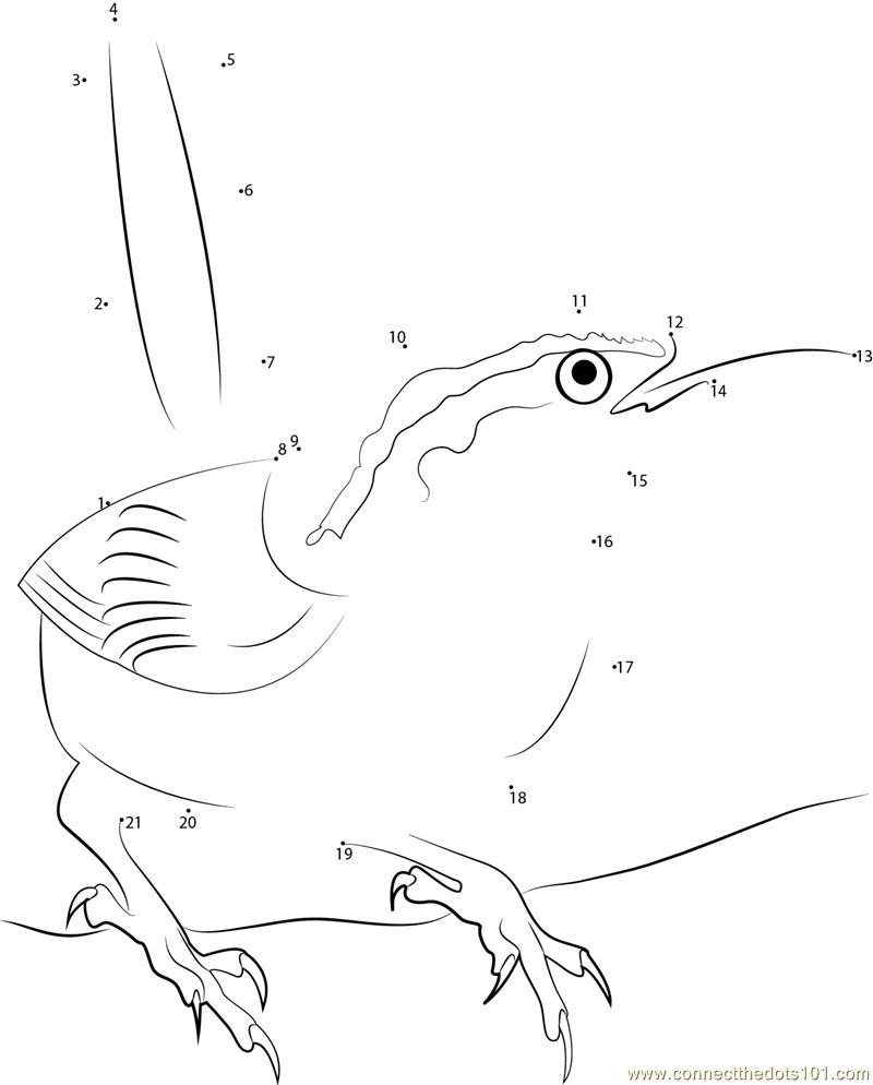 carolina wren coloring page - connect the dots carolina state bird birds carolina