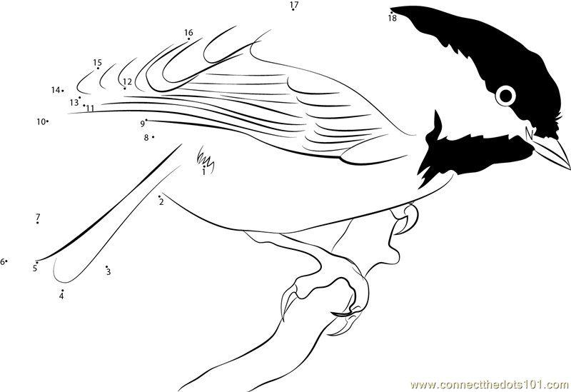 Connect the dots chickadee state bird of maine birds for Idaho state bird coloring page