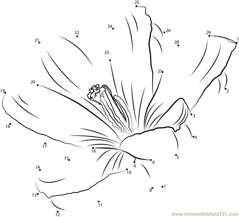 Connect The Dots Crocus Flower Flowers Gt Crocus