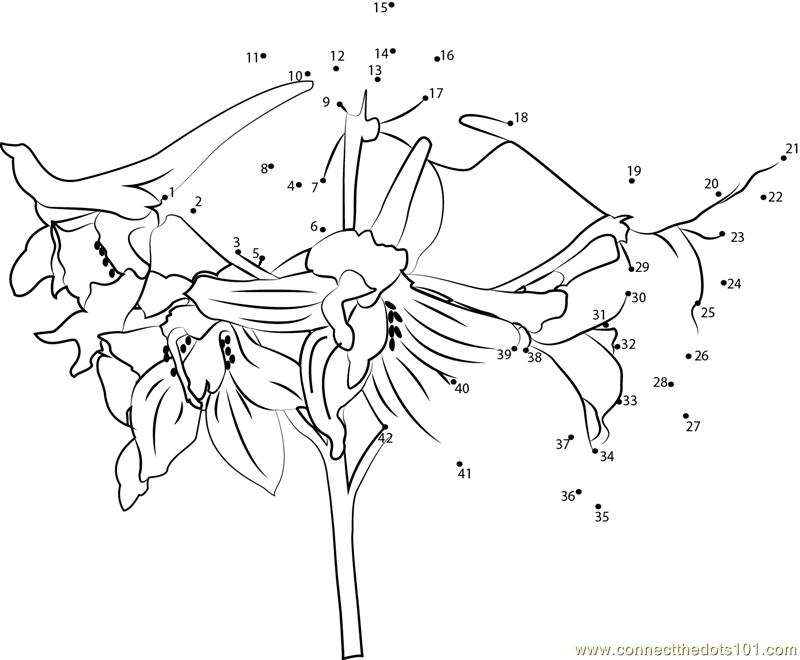 Connect The Dots Delphinium Flower (Flowers > Delphinium