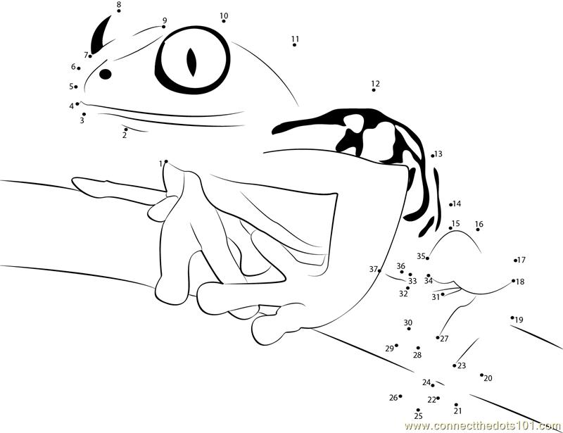 Tree Frog On-Branch Dot To Dot Printable Worksheet