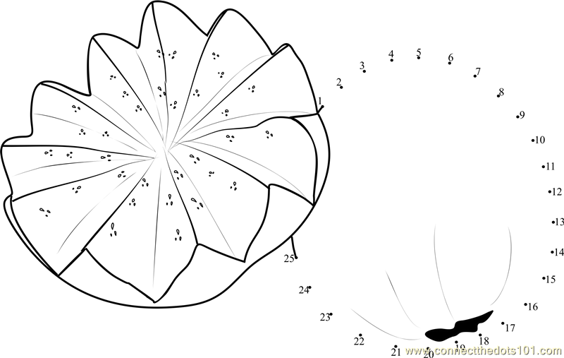 Connect The Dots Guava Star Shape (Fruits > Guava)