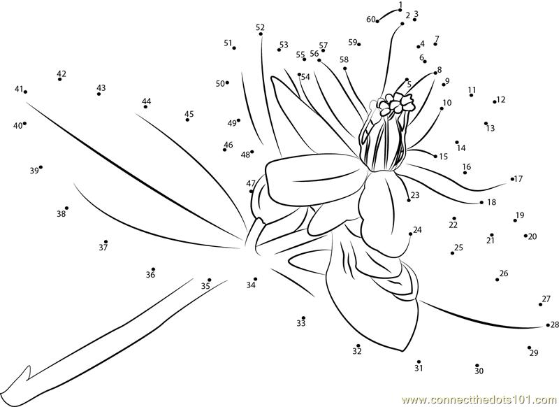 Connect The Dots Hypericum (Flowers > Hypericum)