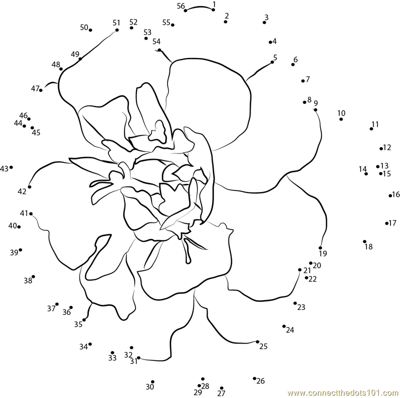 Marigold_Flower_connect_dots also with skidder coloring pages 1 on skidder coloring pages together with skidder coloring pages 2 on skidder coloring pages in addition skidder coloring pages 3 on skidder coloring pages in addition skidder coloring pages 4 on skidder coloring pages
