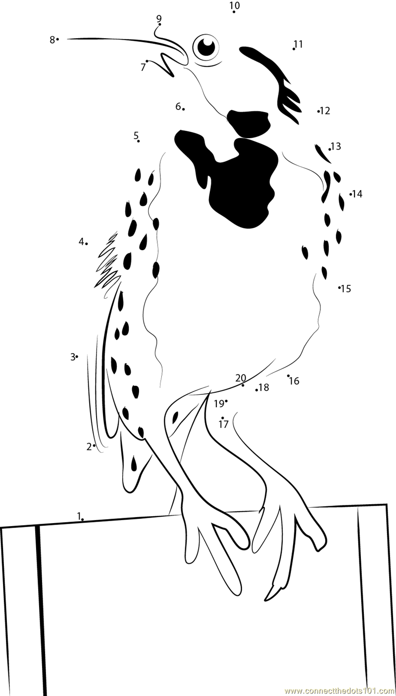 Connect the dots sturnella bellicosa birds meadowlark for Meadowlark coloring page