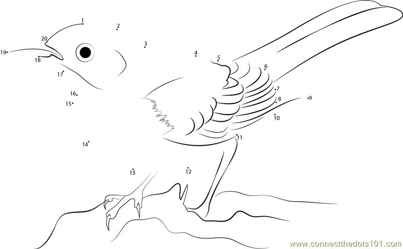 Connect The Dots Mockingbird Sleek Birds Gt Mockingbird