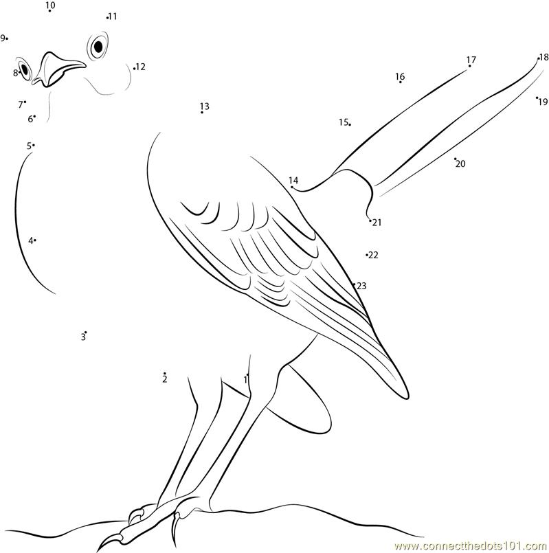 Connect The Dots Northern Mockingbird Look Birds