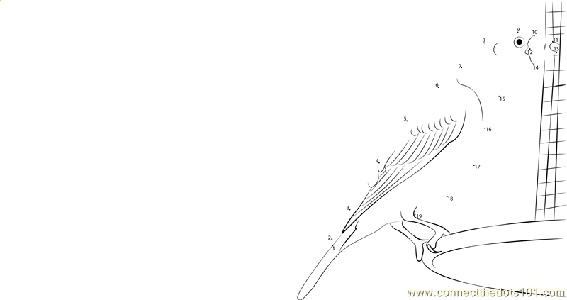 purple finch coloring page - connect the dots purple finch reach birds purple finch