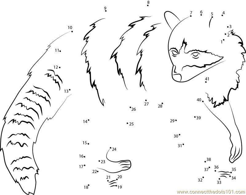 Connect The Dots Raccoon (Animals > Raccoon)