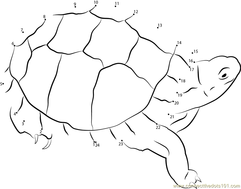 800 x 628 png 65kB, Connect the dots Eastern Box Turtle worksheet, Dot ...