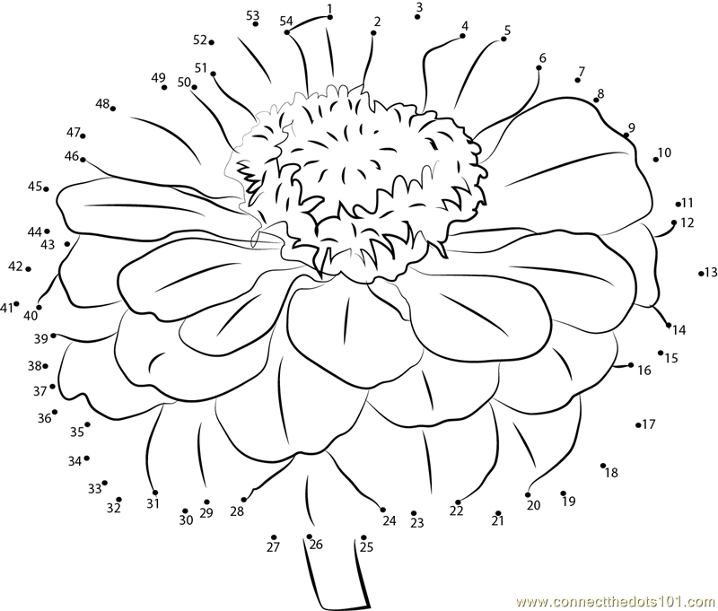 zinni petal coloring pages - photo#6